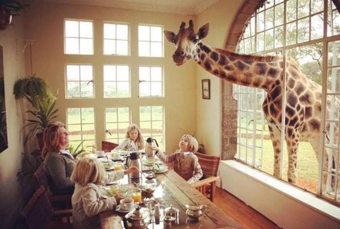 Places To Visit Before You die Giraffe Manor, Kenya