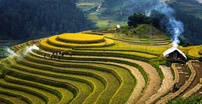 places to visit before you die Rice Terrace Fields in Mu Cang Chai, Vietnam